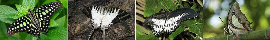Butterflies at Malabar Wildlife Sanctuary