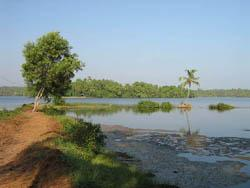 Backwaters in Ponnumthuruthu island