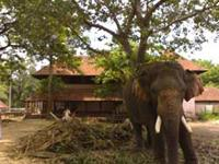 Elephant sanctuary near Guruvayoor temple