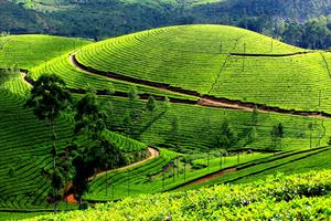 Munnar - romantic destination of Kerala
