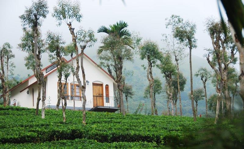 tea-terrace-nature-resort-wayanad