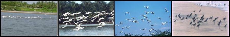 ruling bird anu across malayalamkambi kada fry watch how hard this