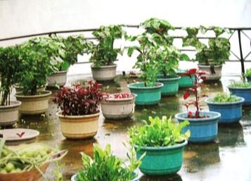 Significance of Kitchen Garden in Kerala