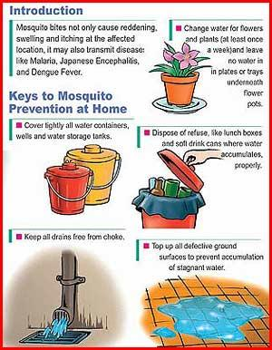 dengue control measures There is no vaccine available against dengue, and there are no specific  medications to treat a dengue infection this makes prevention the.
